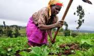 Ghc 1.85bn Invested In Ghana's Agric Sector — Ken
