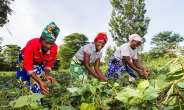Reflections Of Farmers Day For Farming Countries