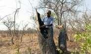 Forestry officer Best Muchenje inspects a mopani tree which loggers felled to provide fuel.  By Jekesai NJIKIZANA (AFP)