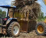 Sugarcane Growers Need Protection From The Govt!