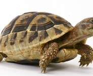 Imo Chief Of Staff And The Dance Of Tortoise