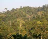 Let's Intensify The Cultivation Of New Forest Reserves