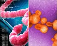 The Ebola and Lassa fever viruses