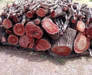 Upper West Region: Shea Tree under attack as Charcoal Business boom