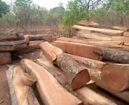 S/R: 1,042,580 Trees destroyed every year
