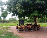 Students studying under tree