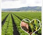 How to Make Vinasse into Organic Fertilizer