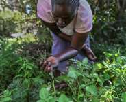 Green shoots: Seedballs are helping new growth in Kenya forests, devastated by colonial clearing and agriculture production.  By TONY KARUMBA (AFP)