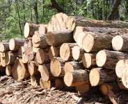 Ghana Timber Association Condemns Okyenhene's Task Force