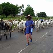 What Is It About The Fulani People Of Nigeria?