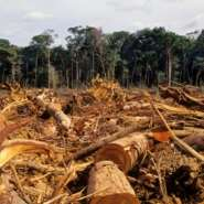 Destroying Ghana's Forests Does Not Make Long-Term Economic Sense - Indeed, It Is Downright Dangerous