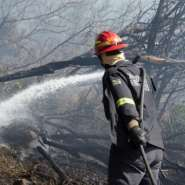 At least 600 hectares of land were charred.  By RODGER BOSCH (AFP)