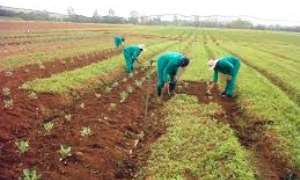 Only 59 per cent of farmers apply inorganic fertilizer - Study