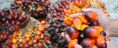 The Palm Oil Miracle: Protect the Heart, Brain & Improves Skin and Hair Health….