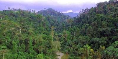 Zero extinction status makes Atewa no-go area for mining
