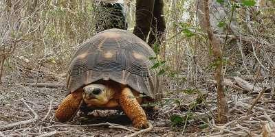 © Rajo Adolphe Landry Andrianiaina / Turtle Survival Alliance