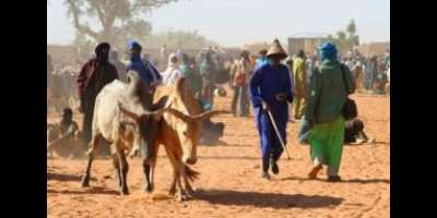 The Herdsmen: Our Partners Our Enemies?