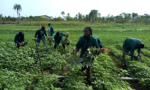 IITA YOUTH AGRIPRENEURS ON VEGETABLE FIELD