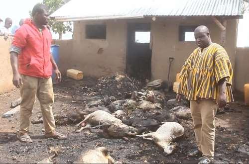 Kusanaba: Animal farm set ablaze by unknown arsonists