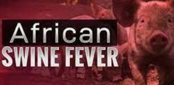 ASF Outbreak kills 200 pigs, seven farms affected