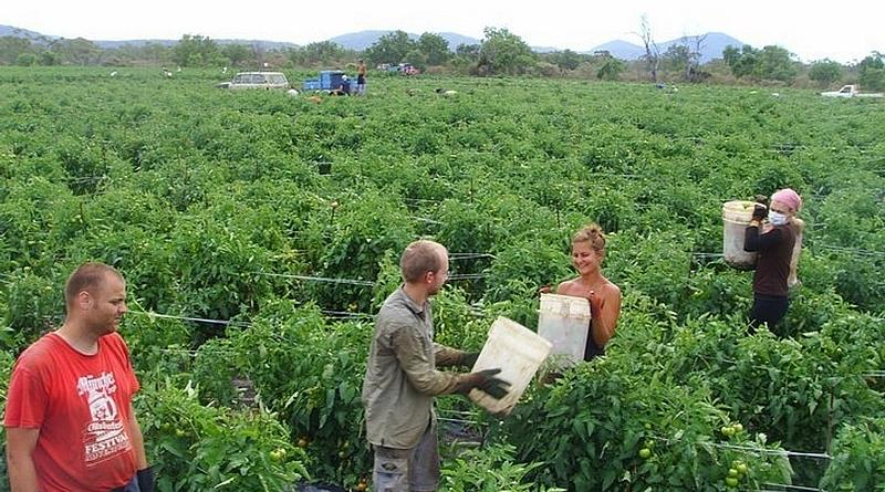 agriculture and fruit picking jobs abroad.JPG