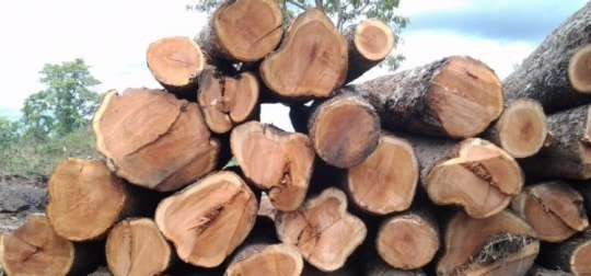 Minister Warns Forestry Commission Officials Over Rosewood