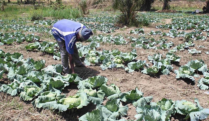 Strengthening Resilience Of Rural Women Through Dry Season Farming In Ghana