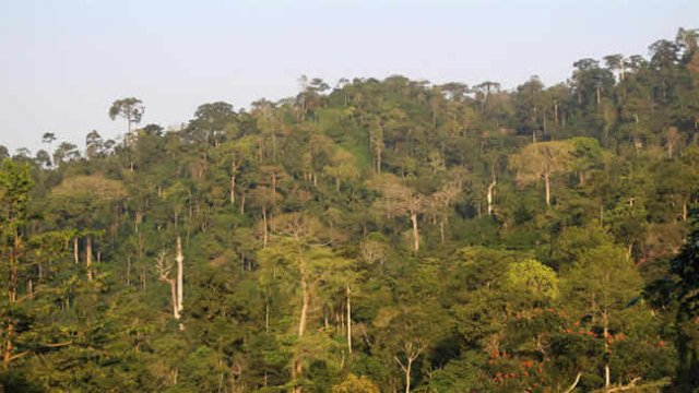 Atewa Forest: Groups Petition Parliament To Halt Mining
