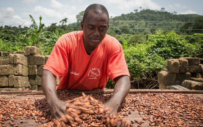 Ghana And Ivory Coast, Fight For Higher Cocoa Price In Africa, Chocolate Could Soon Cost More