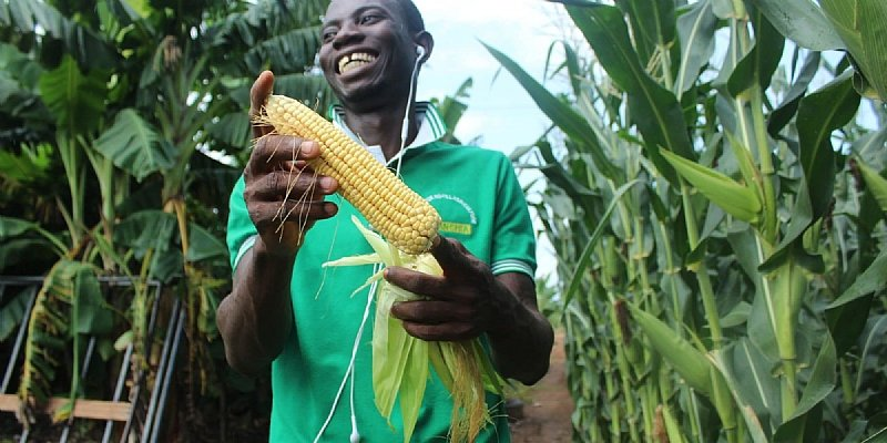 How Agriculture Impacts African Economies