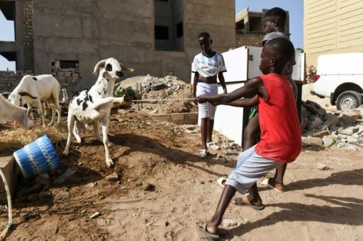 Religious feast highlights interfaith unity in Senegal