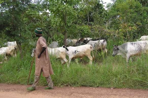 No Fulani Man Was Chased Out of Enugu - Group Debunks Video Report - Modern Ghana