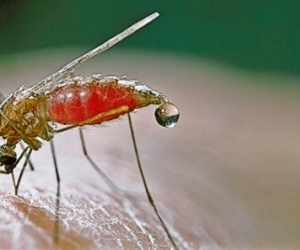 Ghana calls for effective strategies to eradicate malaria ...