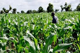 Hopeful Futures: The Link Between Agriculture and Deradicalization