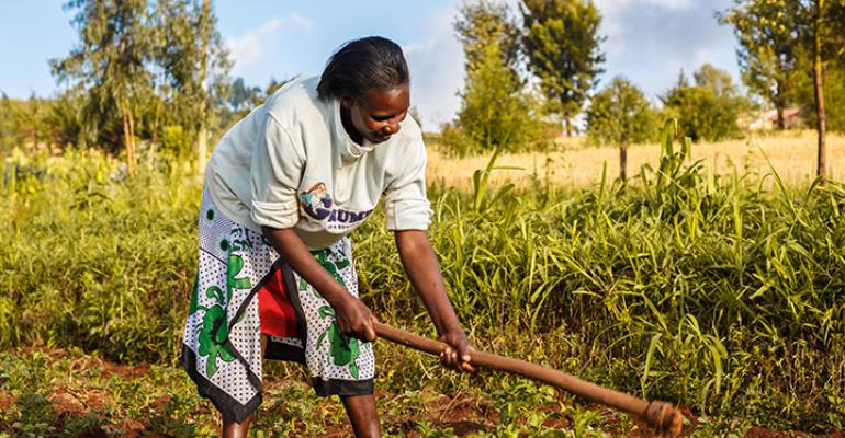 Financing Agriculture In Ghana: The Plight Of Smallholder Farmers