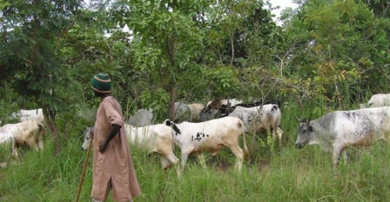 Fulani Herdsmen To Be Integrated Into Communities In Gonjaland