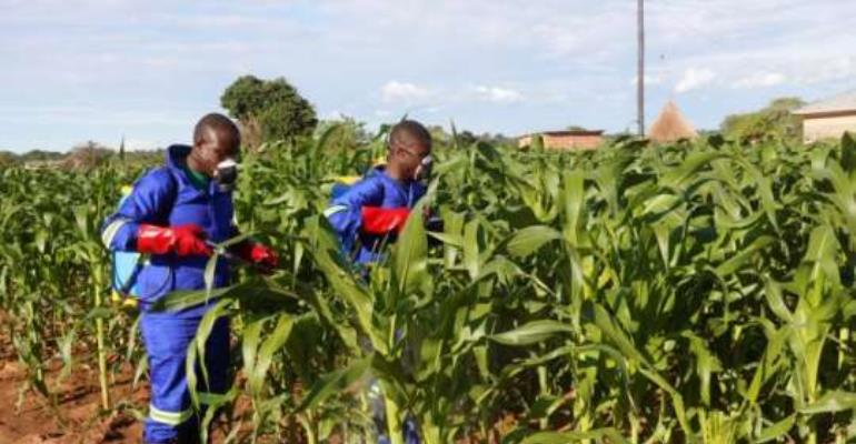 35 Undergo Training To Fight Fall Armyworm
