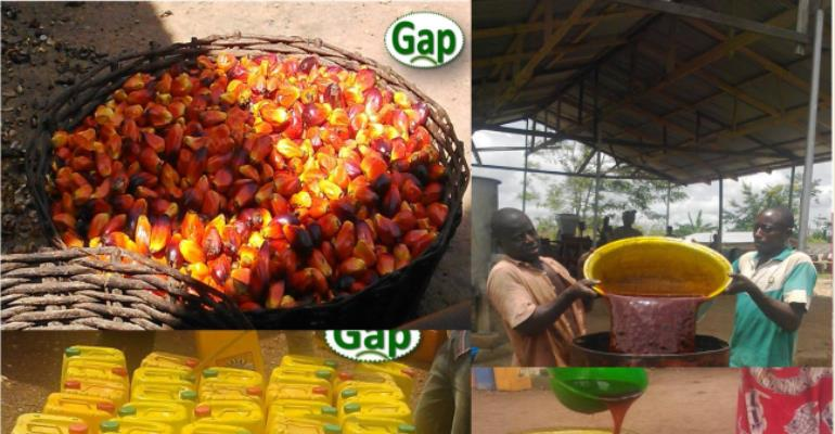 PALM OIL Agribusiness Needs A Bit More ATTENTION?