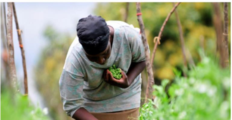 New Program To Improve Ghana's Food Safety And Grow Agricultural Exports