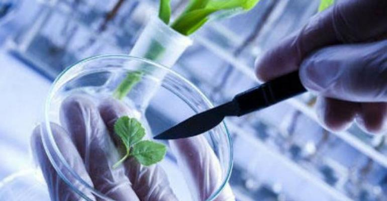 Ghana Remains Poised For Biotechnology—Report