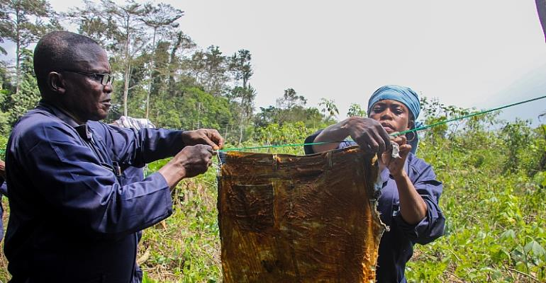 Farmers Lead The Way To Reduce Human-Elephant Conflict In Kakum