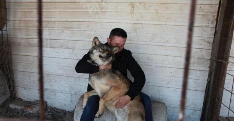 Meet The Wolf Named 'Trump'