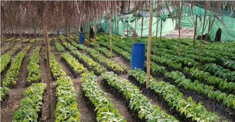 Tarkwa-Nsuaem Assembly Supports 1D, 1F With 1 Million Cocoa seedlings
