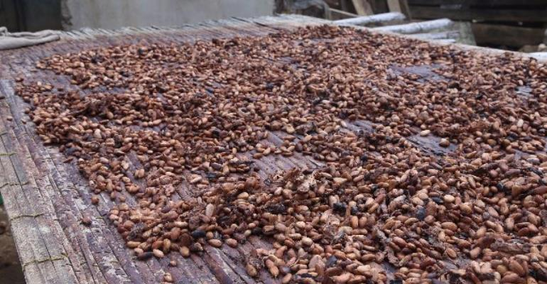 Standard Bank Reveals Revenue From Cocoa, Oil Will Support Trade Balance