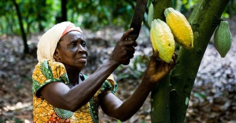 Cocoa To Disappear In 40 Years If Climate Change 'Runs Rampant'
