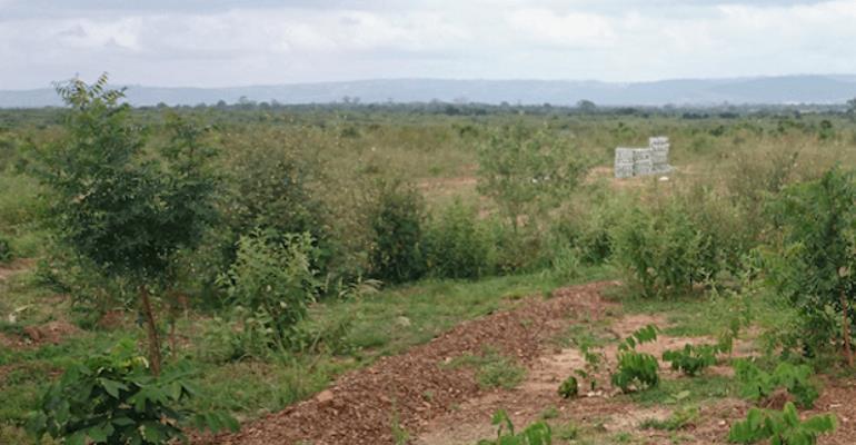 The Impunity Of Land Guards