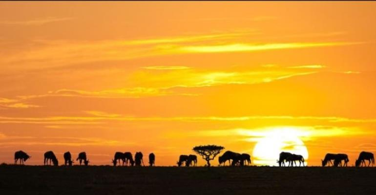 Africa: Heaven For Nature Photographers