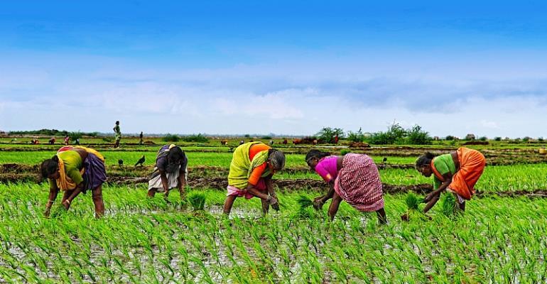 Bawa Abubarkar Is The Best Farmer In Ashaiman