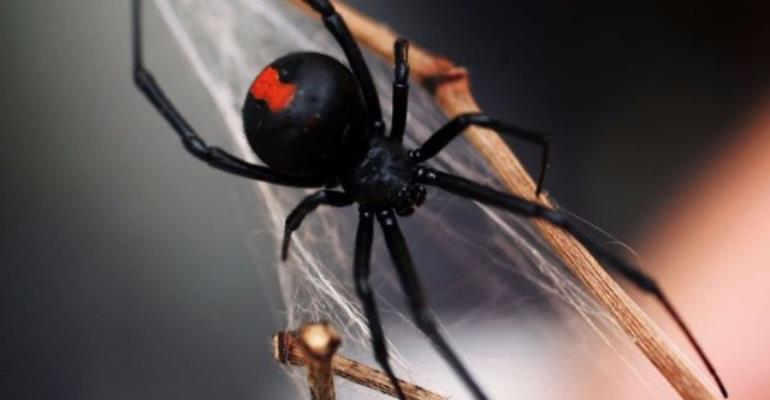 Doctors shocked to find spider spinning webs inside man's ear