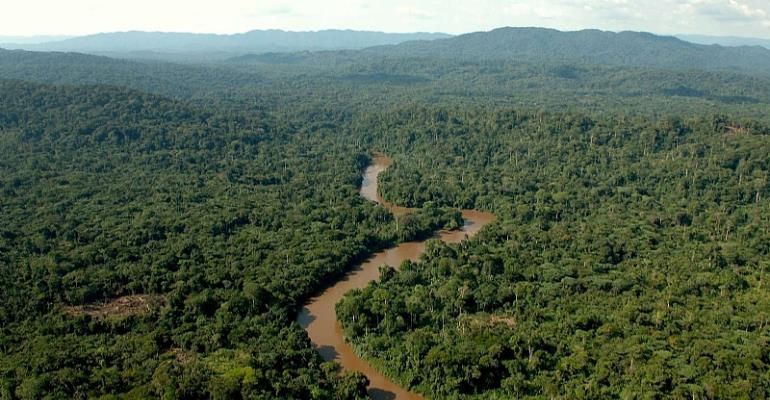 Here Are The Eight Largest Forests In Africa That Hold The Continent's Future, You Will Definitely Get Lost In Them